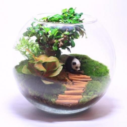 """Сад в стекле """"Бонсай""""-6721522"""