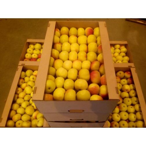 Яблоко свежее-6011748