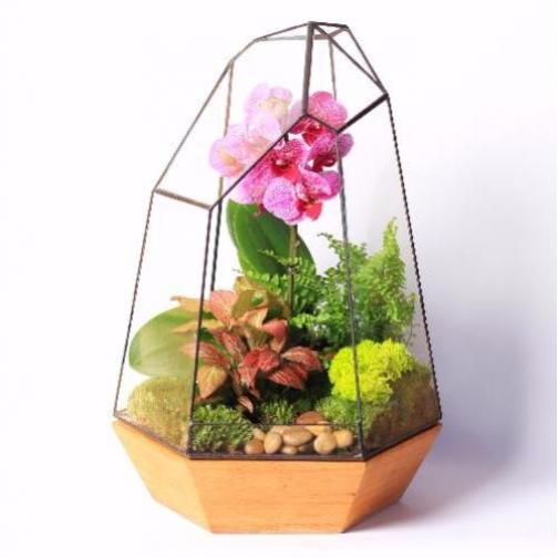 Сад в стекле Архирариум-6721529
