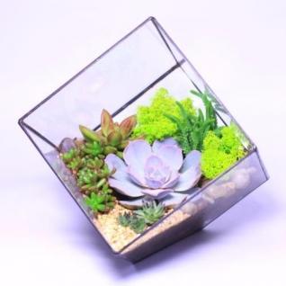 Сад в стекле Куб-6721519