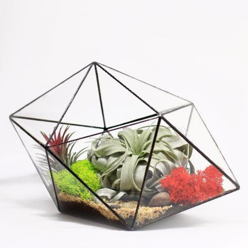 "Сад в стекле ""Дремучий лес""-6721528"
