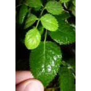 Удобрение Биополимерный комплекс (БПК)  адьювант-биоприлипатель для обработки в период вегетации, л