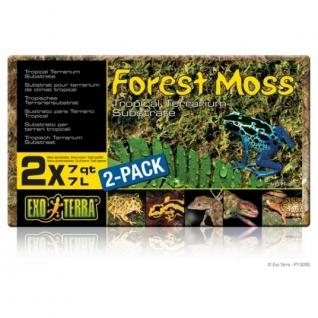 Hagen Растение Terra forest plume moss-1292255