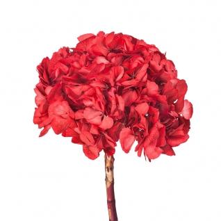 Ветка Гортензии Ø20 cm Красный-725562