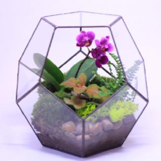"""Сад в стекле """"Эйфория""""-6721525"""