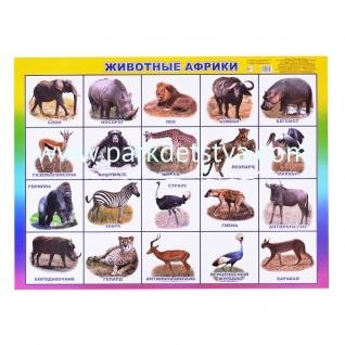 Плакат карт Животные Африки Алфея Леда