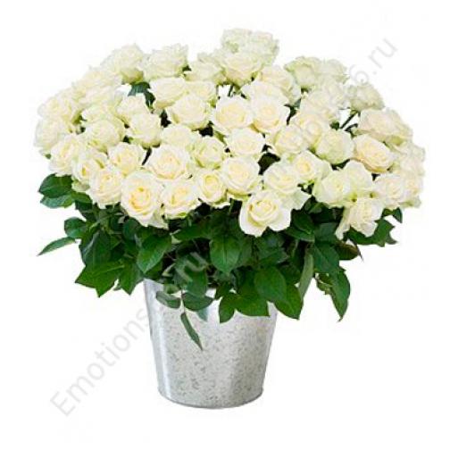 Розы 101 штука 50 сантиметров-873741