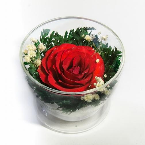 CuS-R1r роза красная в стекле-875717