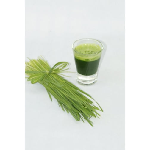 Замороженный сок ростков пшеницы( витграсс)БЕСПЛАТНАЯ , малый курс-465642