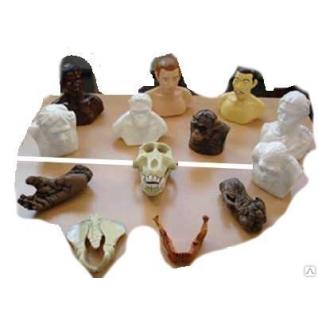 """Набор палеонтологических находок """"Происхождение человека"""""""