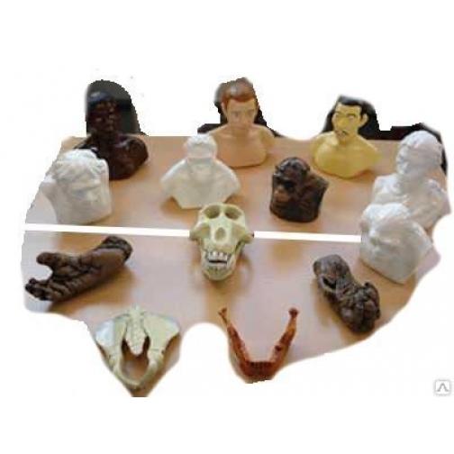 """Набор палеонтологических находок """"Происхождение человека""""-95790"""