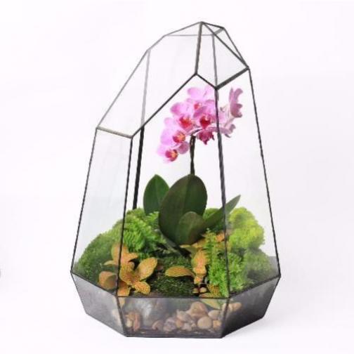 Сад в стекле (флорариум) Орхидея 40см-6721523